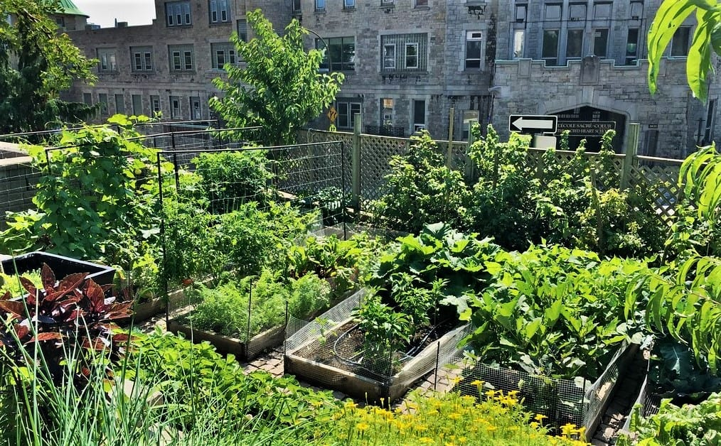 Eud'Action #1 : Urban Shared Garden