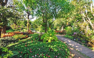 Food Forest – Sustainable food production and low maintenance gardening