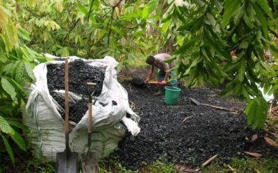 Biochar – The dark Amazonian soil's secret